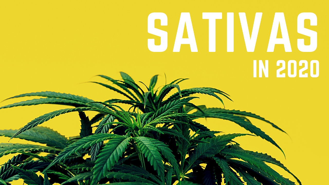 What are the best Sativa Strains in 2020