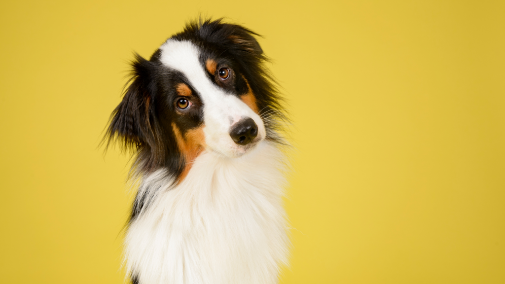 How to keep pets safe from cannabis smoke