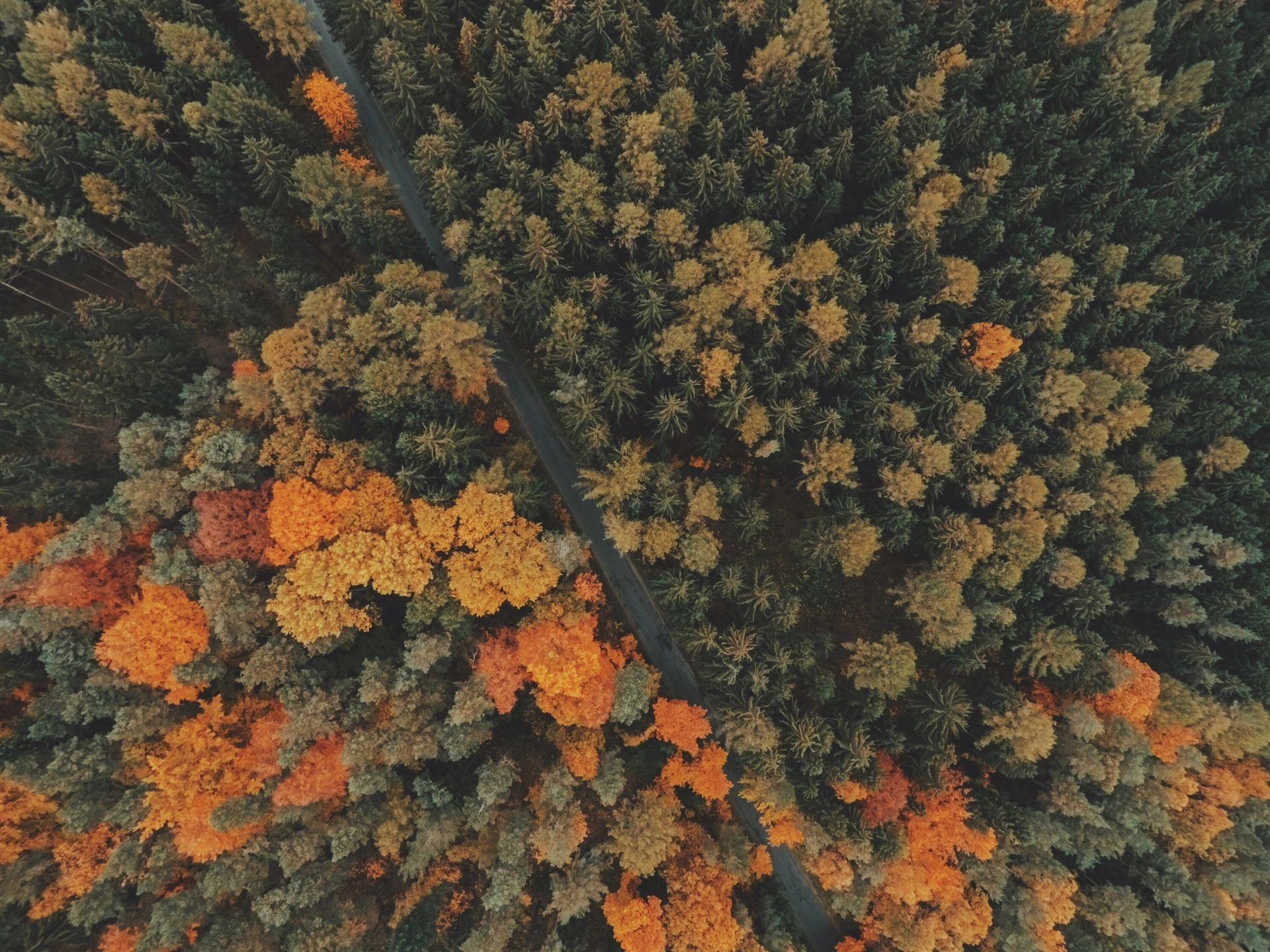 Plantemos más árboles