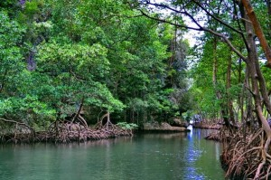 rain forest tours santo domingo