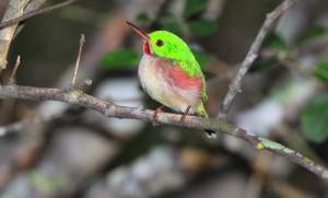 Los Haitises Birding Tour Santo Domingo