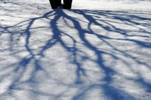 treeshadow22
