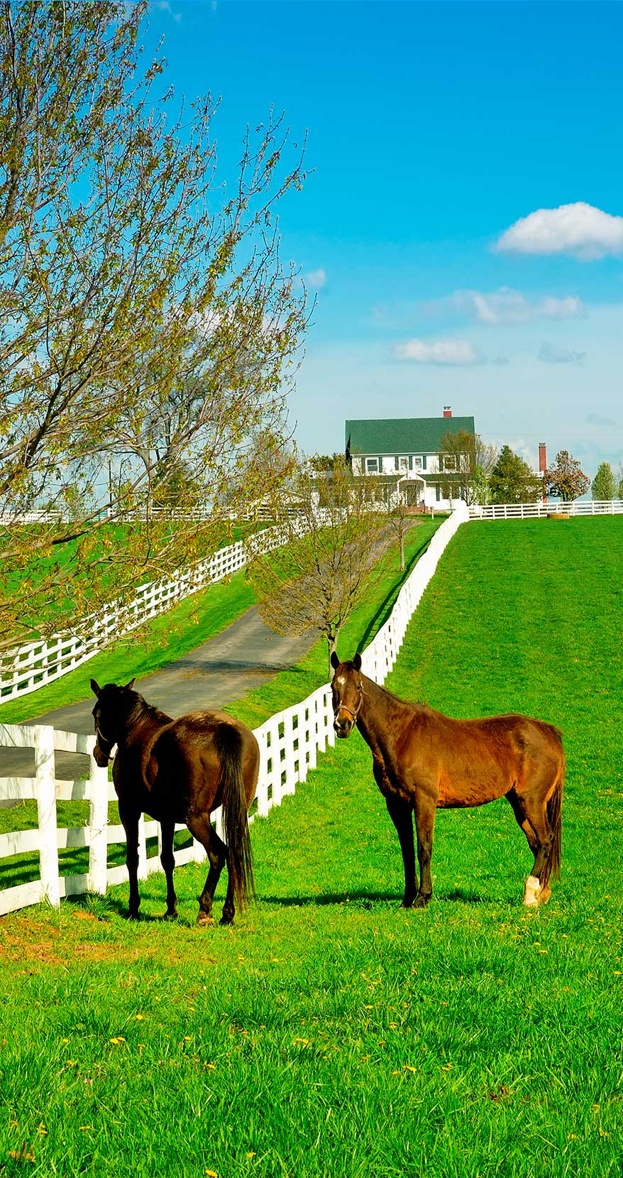 home_horsefarm