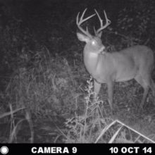 How to Kill a Nocturnal Buck