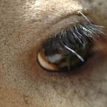 Whitetail Sensory: What Do Deer Really See?
