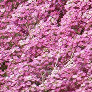 Easter-Bonnet-Deep-Pink