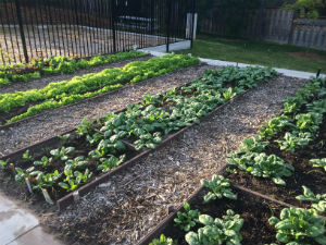 Community Garden (1)