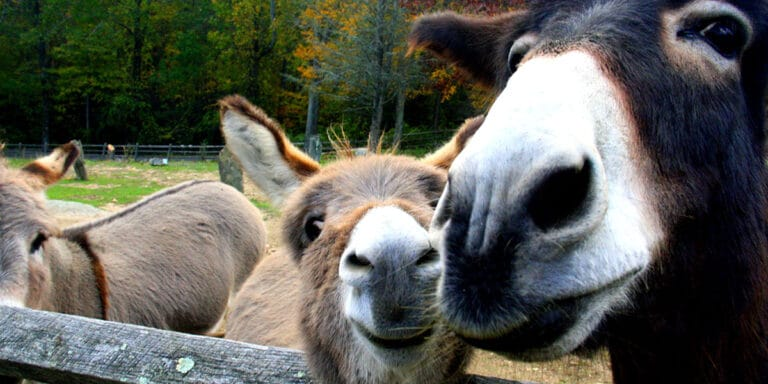 donkeys-2