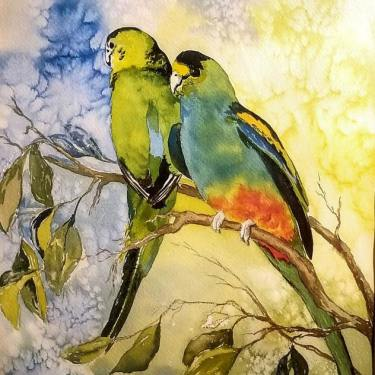 Patricia Cole Parakeets 16x12 watercolor