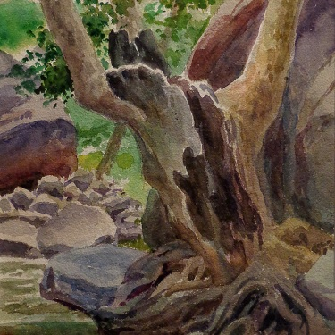 Ben Carre Tree in Taquitz Canyon 12x9 Watercolor
