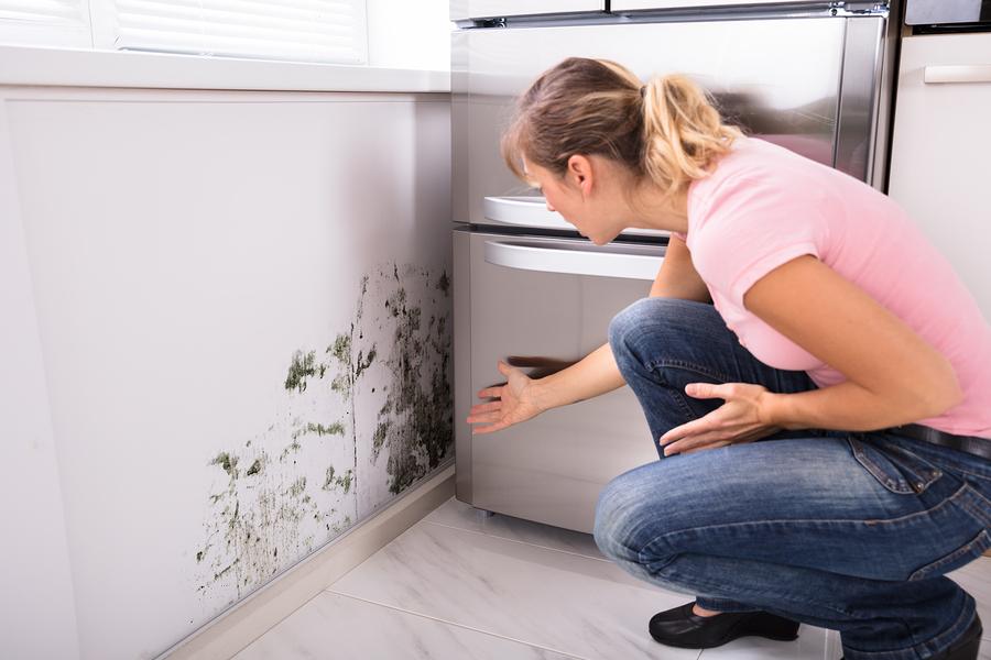 inspecting-mold.jpg