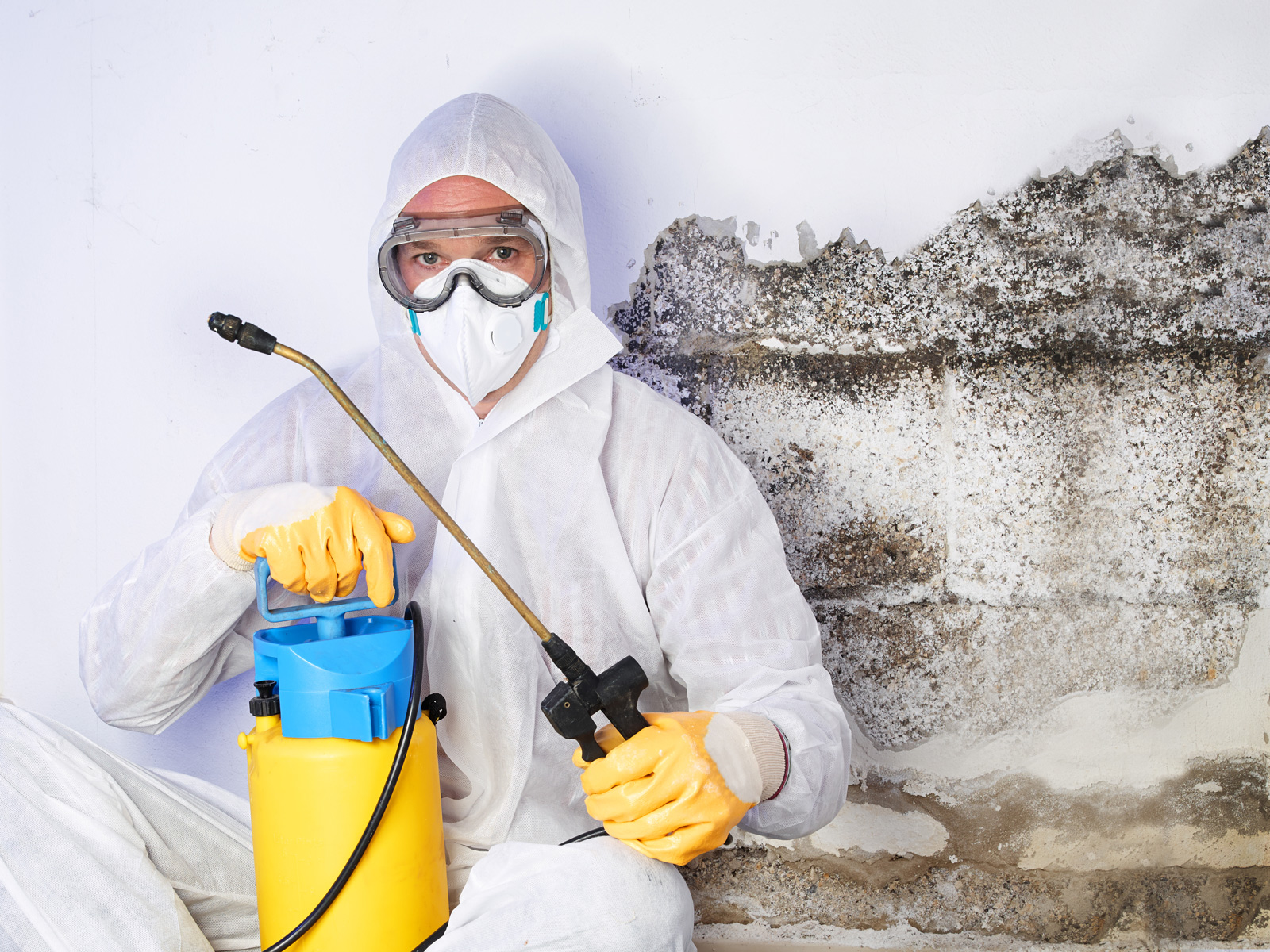 mould-remediation-cleanup-adobestock_71268057-1600px.jpg