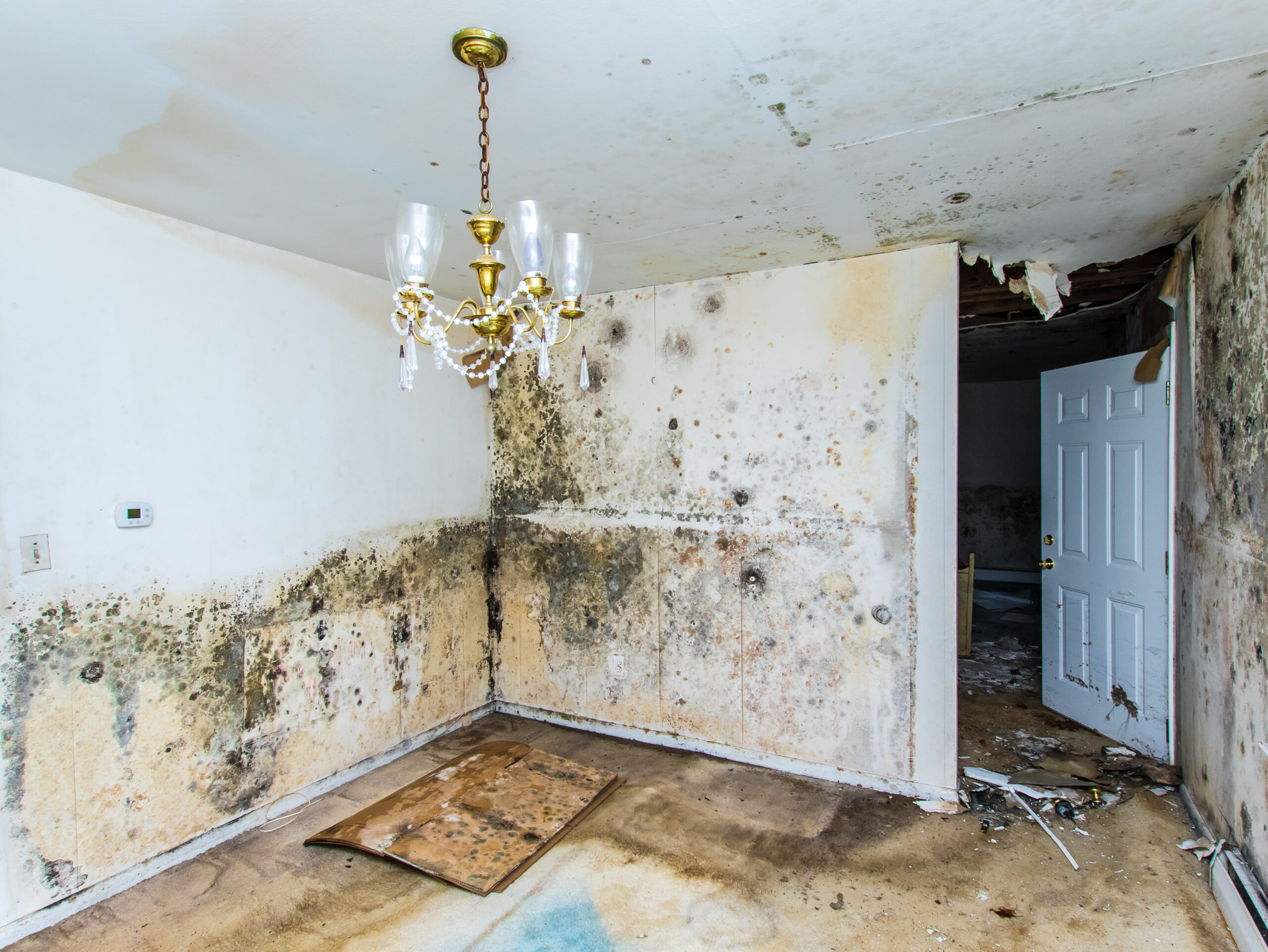 Our Services - Mold Inspections & Assessments