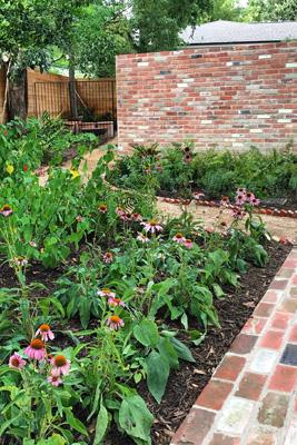 Purple Coneflowers, Coneflowers, Woodland Garden, Houston Landscape Design, Houston Gardens, Houston Landscaping, Houston Butterfly Plants, Houston Woodland Garden, Houston Pollinator Plants