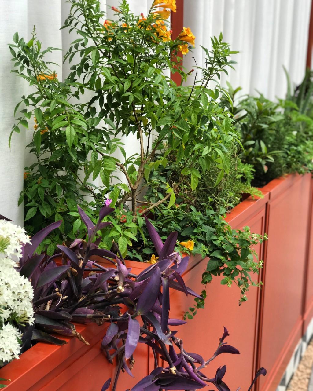 houston landscaping, mediterranean garden, edible garden, spanish garden, houston modern landscaping, houston landscape design, mad houston, spanish restaurant