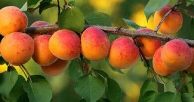 CHỐNG UNG THƯ TỐT NHẤT: Loại trái cây khiến tế bào ung thư sẽ chết đói
