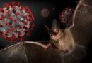 Phát hiện 142 mẫu virus Corona liên quan đến SARS trên dơi ở Trung Quốc
