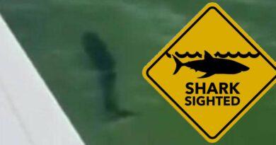 Cá mập được phát hiện ở bãi biển Albert Park trong một lần xuất hiện 'kỳ lạ'