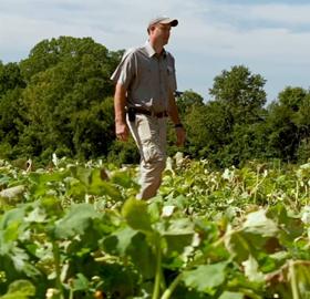 First Sun's HealthySpark helps Farmers