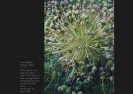 Radiant Allium © Linda Ingham
