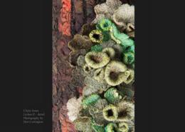 Lichen II © Claire Jones
