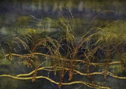 Marsh Grasses ©Dianne Corso