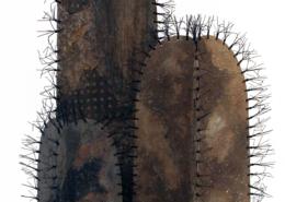Cactus ©Dianne Corso