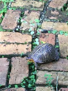 Turtle Sister, my Teacher
