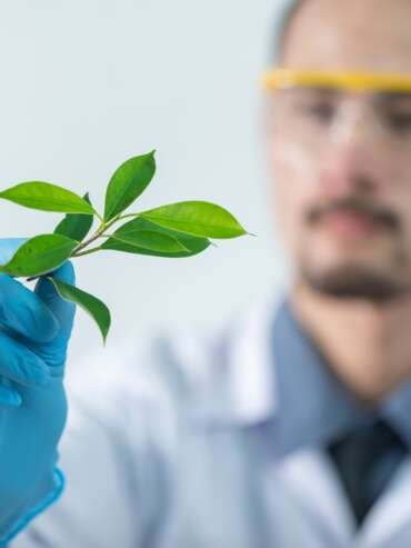 person-holding-green-leafed-plant-2280551