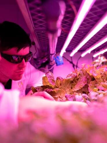scientist-checking-crops-in-laboratory-3912479