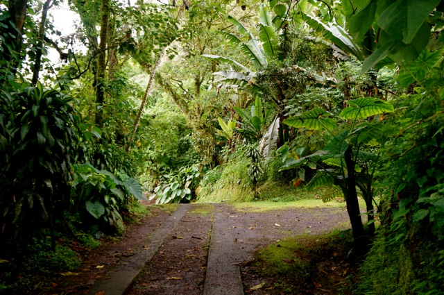 Rainforest Friday: 8 Things you Learn During Your First Week Living in the Rainforest