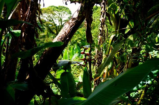 Rainforest Friday