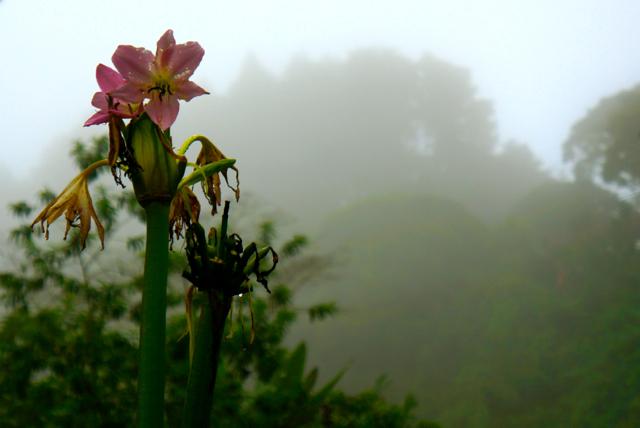 Farewell to Costa Rica's Rainy Season