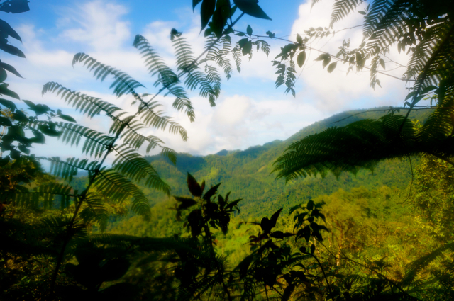 Hiking in Costa Rica. A Hike Through the Costa Rican Rainforest, Days 4 and 5
