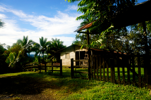 Hiking Costa Rica. A Hike Through the Costa Rican Rainforest: Day Ten and a Conclusion