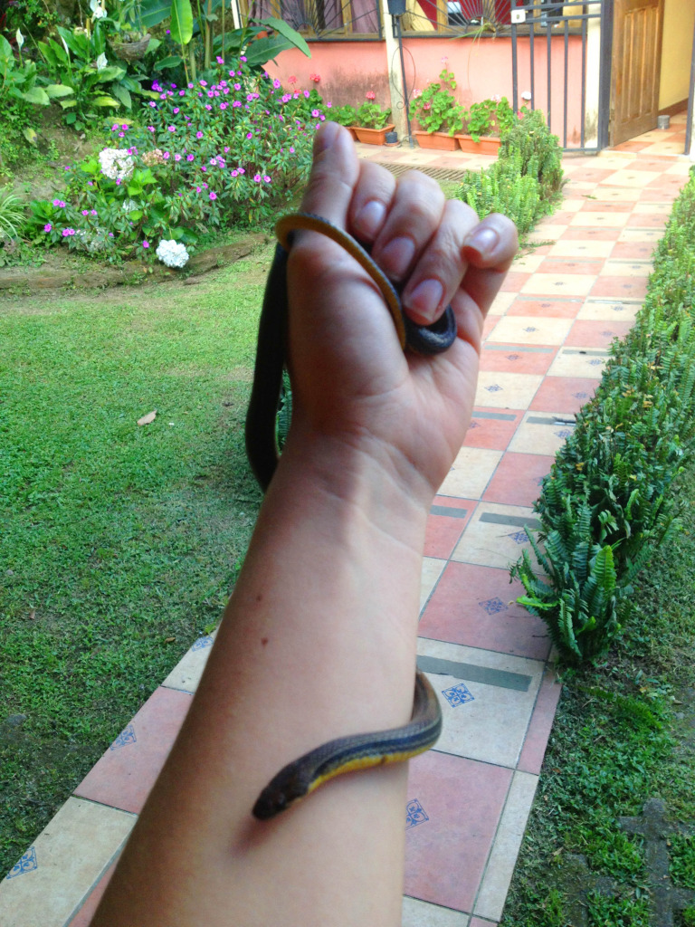 Snakes of Costa Rica