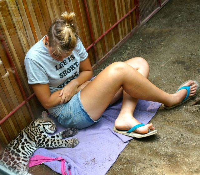 A volunteer sits with a cat at the jaguar rescue center