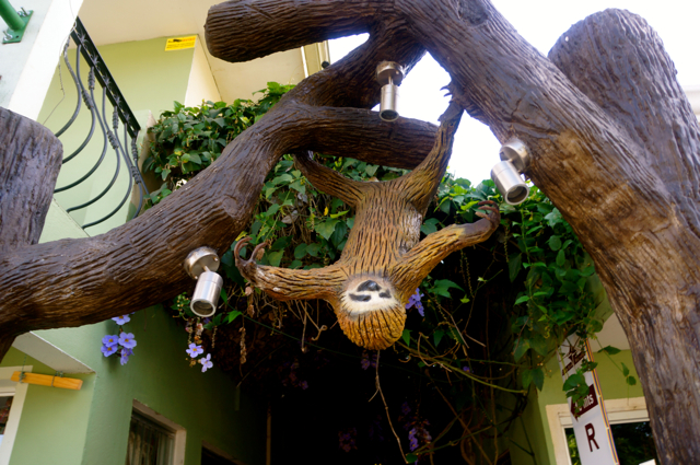 Arenal Hostel Resort Sloth