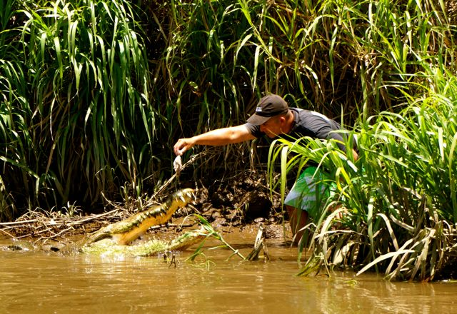 Feeding a Crocodile on Jose's Crocodile Tour