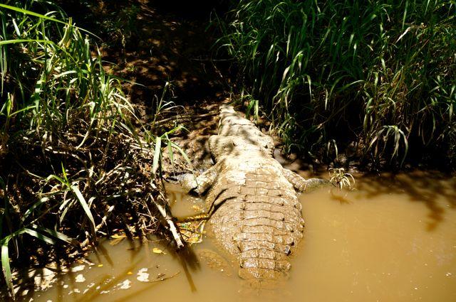 jose's crocodile river tour