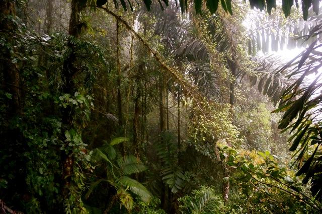 rainforest mist at arenal hanging bridges