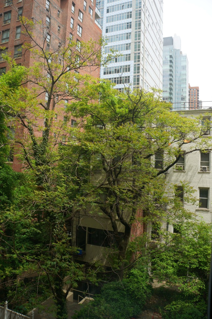 new york city apartment rental view