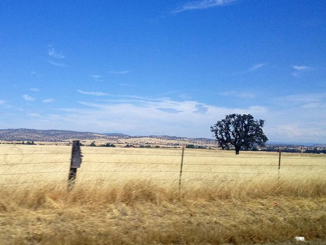 california wheat on a california scenic drive