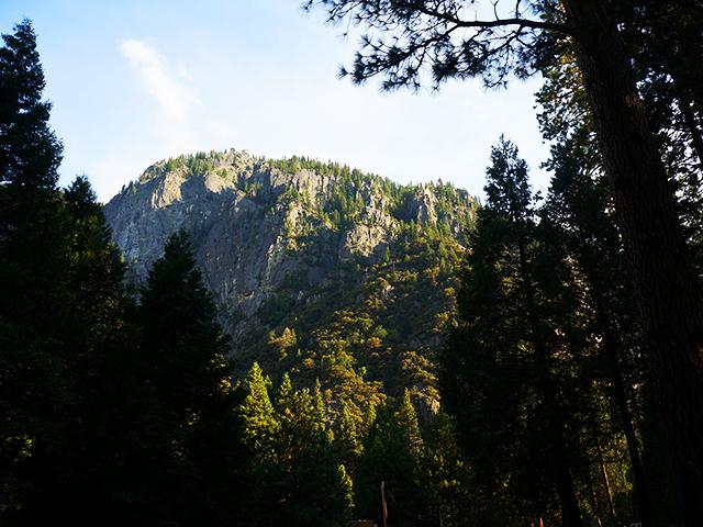 yosemite trees on a california scenid drive