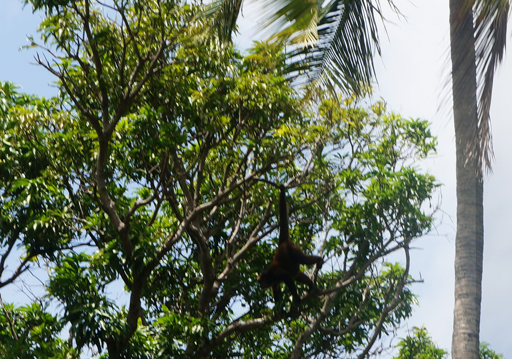 lake nicaragua monkeys