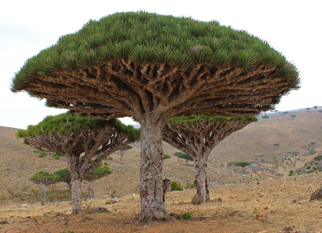 solo travel in Yemen trees