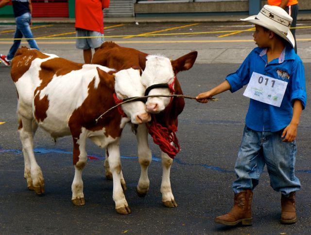 san jose oxcart parade- little cowboy