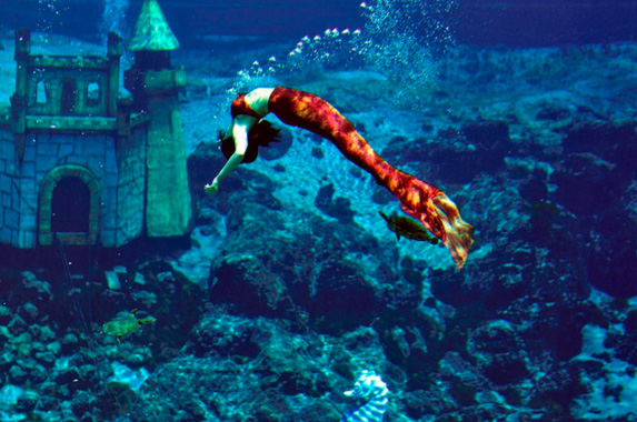 day trip from orlando weeki wachee