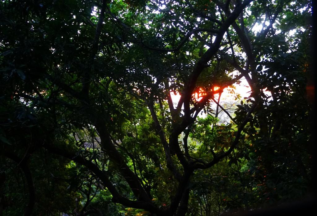 dawn at luz en el cielo hotel in montezuma
