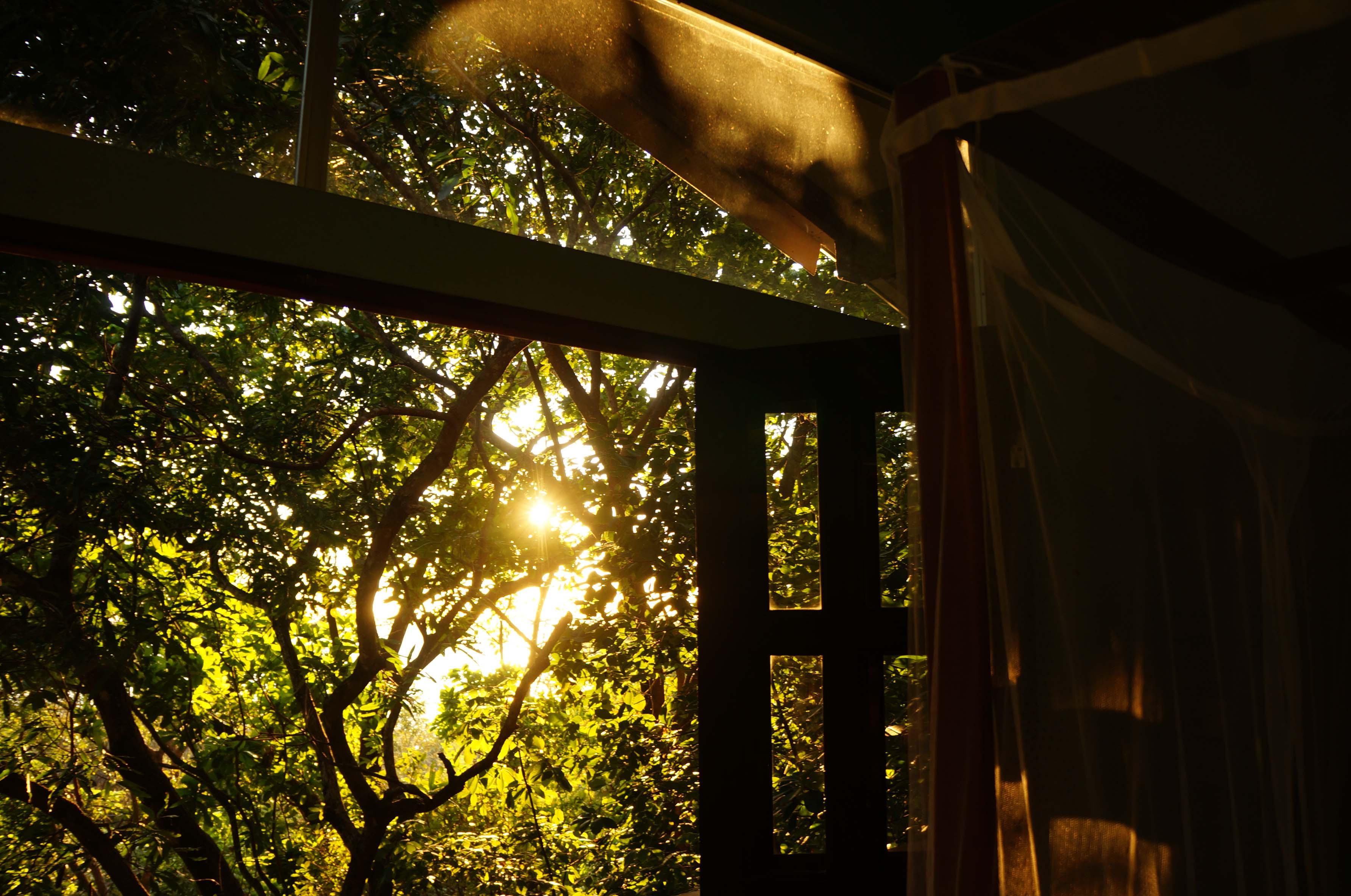Among the Treetops at Luz en el Cielo Hotel in Montezuma